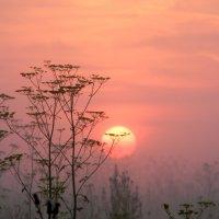 утро туманное... :: Надежда