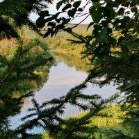 За деревьями река. :: Пётр Сесекин