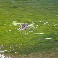 на Черном озере :: Инга Егорцева