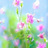 цветы :: Valentina Lujbimova [lotos 5]