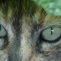 """рептилия под названием """"кошка"""" :: Елена Дапирка"""