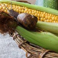 Оказывается, мы любим кукурузу! :: Ирина Приходько