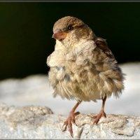 кучерявый малыш :: linnud