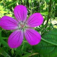 Аленький цветочек :: Миша Любчик