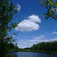 Лесное озеро :: Алла Алина