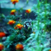 В траве сидел... :: Натали V