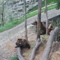 Берн. Медвежья яма :: Елена Павлова (Смолова)