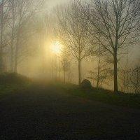 Туманное утро. :: Анна