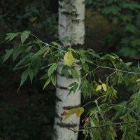 Скоро осень, за окнами - август... :: Владимир  Зотов