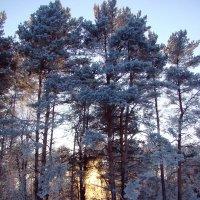 Зимний вечер :: Вера Хомичевская