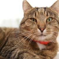 Я кот, Кот Руся :: Таня Лоцманова