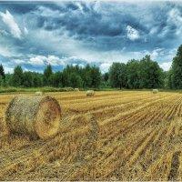 После дождя :: Андрей Куприянов