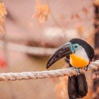 пермский зоопарк :: дмитрий посохин
