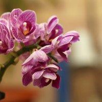 Цветы! :: Дмитрий Чистопольских