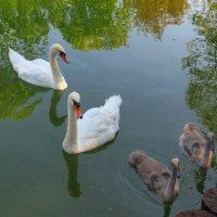 Плавучее семейство :: Ирина Сивовол
