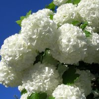 Подарок весны :: Геннадий Храмцов