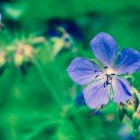 цветок :: Мария Чеснокова