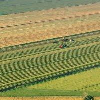 Урожай :: Arkady Berg