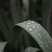 Дождь прошёл... :: Caba Nova