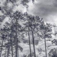 Мистический лес... :: Денис Шангареев