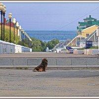 далеко, да и ступенька высокая... :: Михаил Николаев