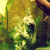 Лягушка :: Vika_B