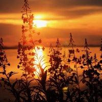 Восход на Белом море :: Наталья Трифонова