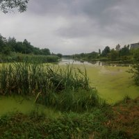 после дождя... :: Taras Oreshnikov