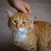 грустныйт кот :: Евгений Тихонов