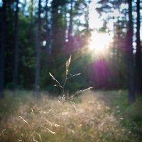 Закат в лесу :: Юрий Никитин