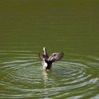 Вдох глубокий, крылья шире... :: Oleg4618 Шутченко