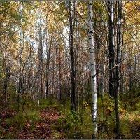 Осенний лес :: Любовь Чунарёва