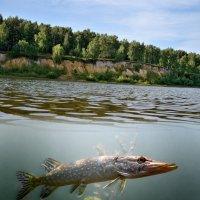 Река :: Николай Терентьев
