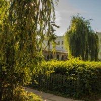 Зелёный оазис на районах... :: Павел Данилевский