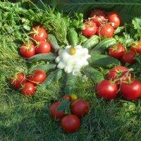 Урожайный пасьянс :: ТаНЮША Ч