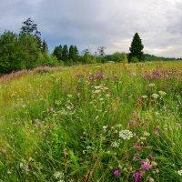 Цветочная поляна :: Валерий Талашов