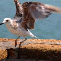 Птиц заходит на посадку :: Никита Иванов