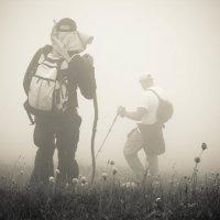 Прогулка в облаках :: Елена Карманчикова