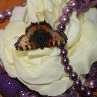 Залетела бабочка ко мне :: Людмила