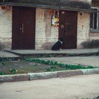 Не пускают собаку домой. :: Света Кондрашова