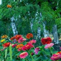 Цветы и деревья! :: Юрий Стародубцев
