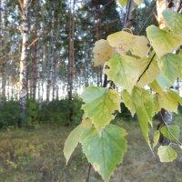 В лесу. :: Надежда Судакова