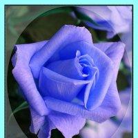 Роза голубая – светлый знак Надежды. :: Valentina Lujbimova [lotos 5]