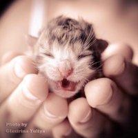 Новорожденный :: Юлия