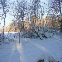 В царстве снежной королевы :: Лидия (naum.lidiya)