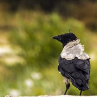 Птица умная и гордая... :: juriy luskin