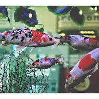 Рыбки . :: Игорь   Александрович Куликов