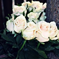 Розы.. :: Angelina Bandura