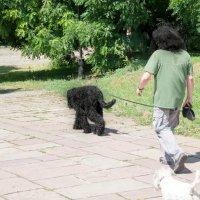 «Каков хозяин, таков и пес» :: Natasha Baranska