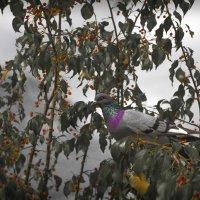 Яблоня в саду :: Надежда Снедкова